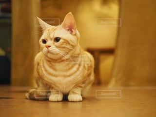 木製テーブルの上に座っている猫の写真・画像素材[1266588]