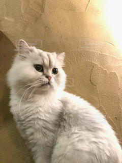 白い建物の上に座っている猫の写真・画像素材[1266598]