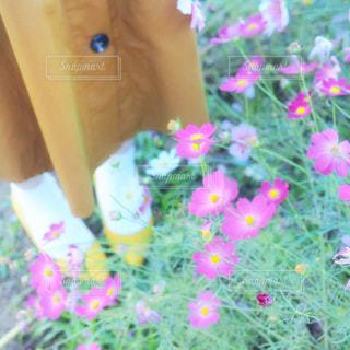 近くの花のアップの写真・画像素材[1607482]