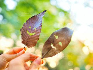 木の部分を持っている手の写真・画像素材[1635505]