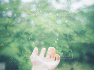 自然,雨,屋外,緑,水,手,水滴,飛沫,雫,梅雨,天気,雨の日,涼やか,玉ぼけ