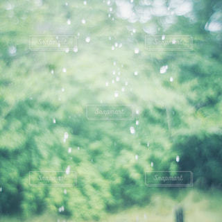 自然,雨,屋外,緑,水,水滴,癒し,飛沫,雫,梅雨,天気,パステルカラー,雨の日,涼やか,玉ぼけ