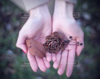 小さな秋を持つ手の写真・画像素材[2801142]