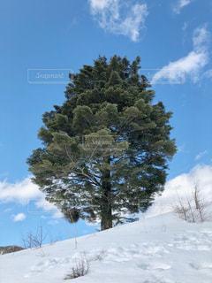 青空と樹木と雪の写真・画像素材[2951393]
