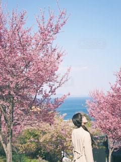 女性,1人,空,花,春,屋外,ピンク,青空,満開,樹木,人,旅行,女子旅,草木,お出かけ,桜の花,さくら,ブロッサム