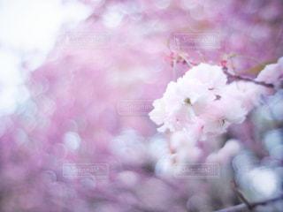 花のクローズアップの写真・画像素材[3034301]
