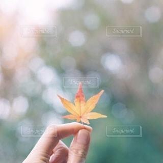 葉っぱを持つ手の写真・画像素材[3800589]