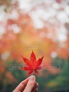 葉っぱのクローズアップの写真・画像素材[3800588]