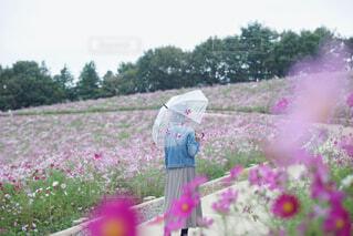 花畑の中で傘をさす女性の写真・画像素材[4560064]