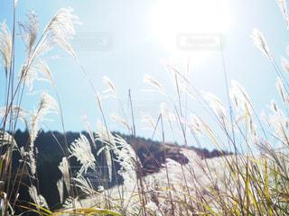 近くの植物のアップの写真・画像素材[872425]