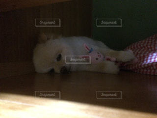 犬 - No.656462