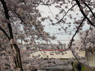 春 - No.403825
