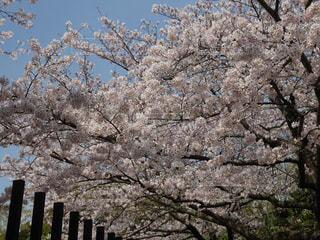 春の写真・画像素材[416067]