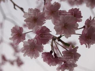 春 - No.416068