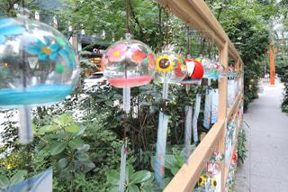 庭のクローズアップの写真・画像素材[3486660]