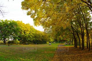 公園の大きな木の写真・画像素材[856321]