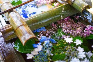 紫陽花の写真・画像素材[3380274]
