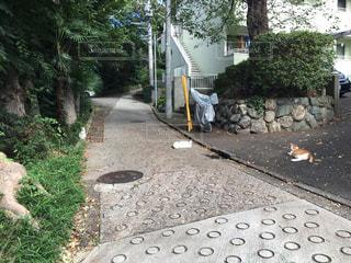 歩道の上を歩く猫 - No.800325