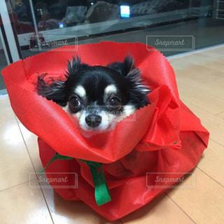 犬,プレゼント,ペット,わんちゃん