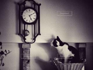 猫の写真・画像素材[427581]