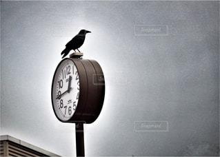 動物,鳥,時計,野鳥,カラス