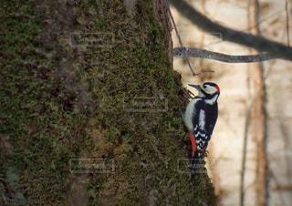 自然の写真・画像素材[453586]