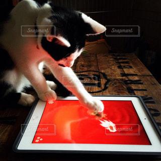 猫が遊ぶアプリの写真・画像素材[726626]