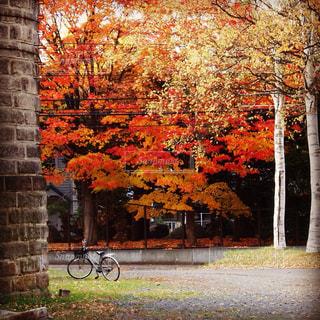 れんが造りの建物の前に木にもたれて自転車の写真・画像素材[844163]