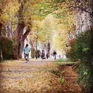 秋の散歩道の写真・画像素材[844201]