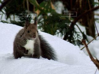 雪の中でご馳走探しの写真・画像素材[913081]