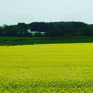近くに緑豊かな緑のフィールドのの写真・画像素材[1224940]