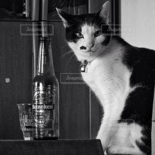 猫BARの写真・画像素材[1418255]