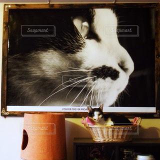 フォトインフォト愛猫の写真・画像素材[1421891]
