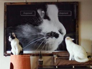 愛猫フォトインフォトの写真・画像素材[1421900]
