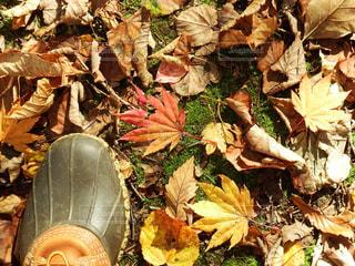 Autumn Leavesの写真・画像素材[1639784]