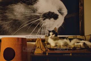 ソファーでくつろぐ猫の写真・画像素材[1640188]