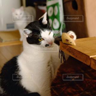 猫の本能の写真・画像素材[2304324]