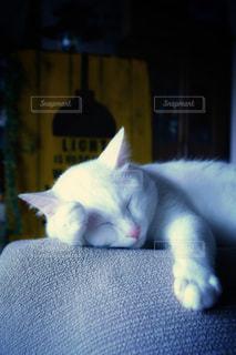猫も夏バテ、の写真・画像素材[2333405]