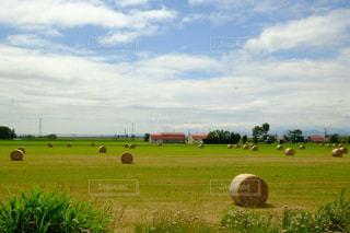 The Hokkaido!の写真・画像素材[2417024]
