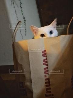 無印良猫の写真・画像素材[2710729]