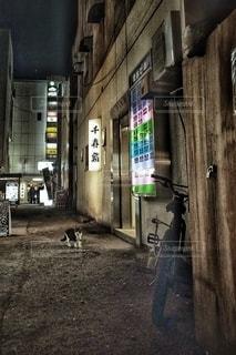 路地裏の猫の写真・画像素材[2748307]