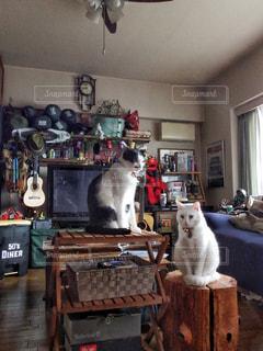 猫のいる生活の写真・画像素材[2806250]