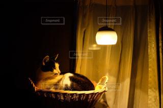 猫,動物,リビング,屋内,暗い,ランタン,ねこ,ペット,人物,籠,自宅,ネコ