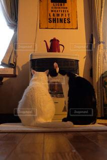 猫,動物,リビング,屋内,白,ペット,白猫,ストーブ,ネコ