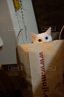 猫,動物,屋内,ペット,人物,白猫,癒し,遊び,紙袋,ネコ