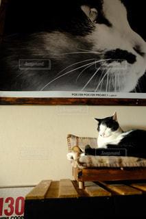 猫,動物,リビング,屋内,ペット,ソファー,人物,座る,ポスター,ネコ,ネコ科の動物
