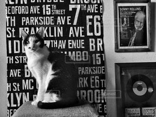 猫,インテリア,動物,リビング,モノクロ,アート,白黒,ねこ,ペット,人物,Brooklyn,ブルックリン,ネコ,インスタバエ,黒と白,ブルックリンスタイル,バスロールサイン