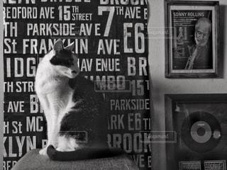 猫,インテリア,動物,モノクロ,白黒,ねこ,ペット,人物,座る,Brooklyn,ブルックリン,ネコ,インスタバエ,黒と白,ブルックリンスタイル