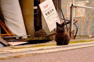 番兵猫の写真・画像素材[3166959]