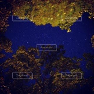 木々の隙間から星探しの写真・画像素材[3411944]